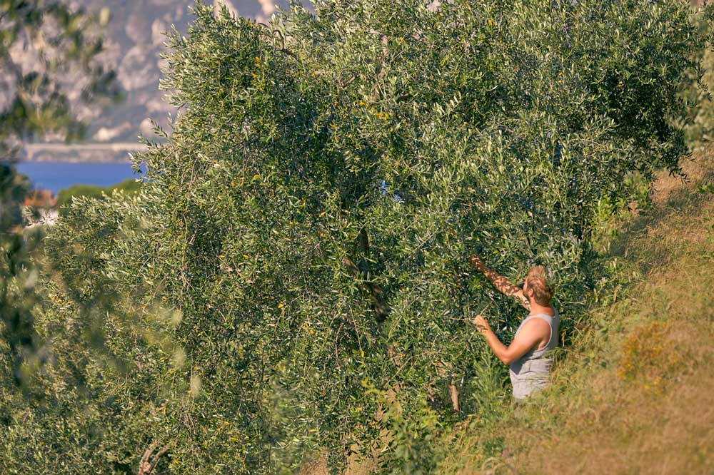 Agriturismo De Bas - L'Azienda Agricola - Olivaia