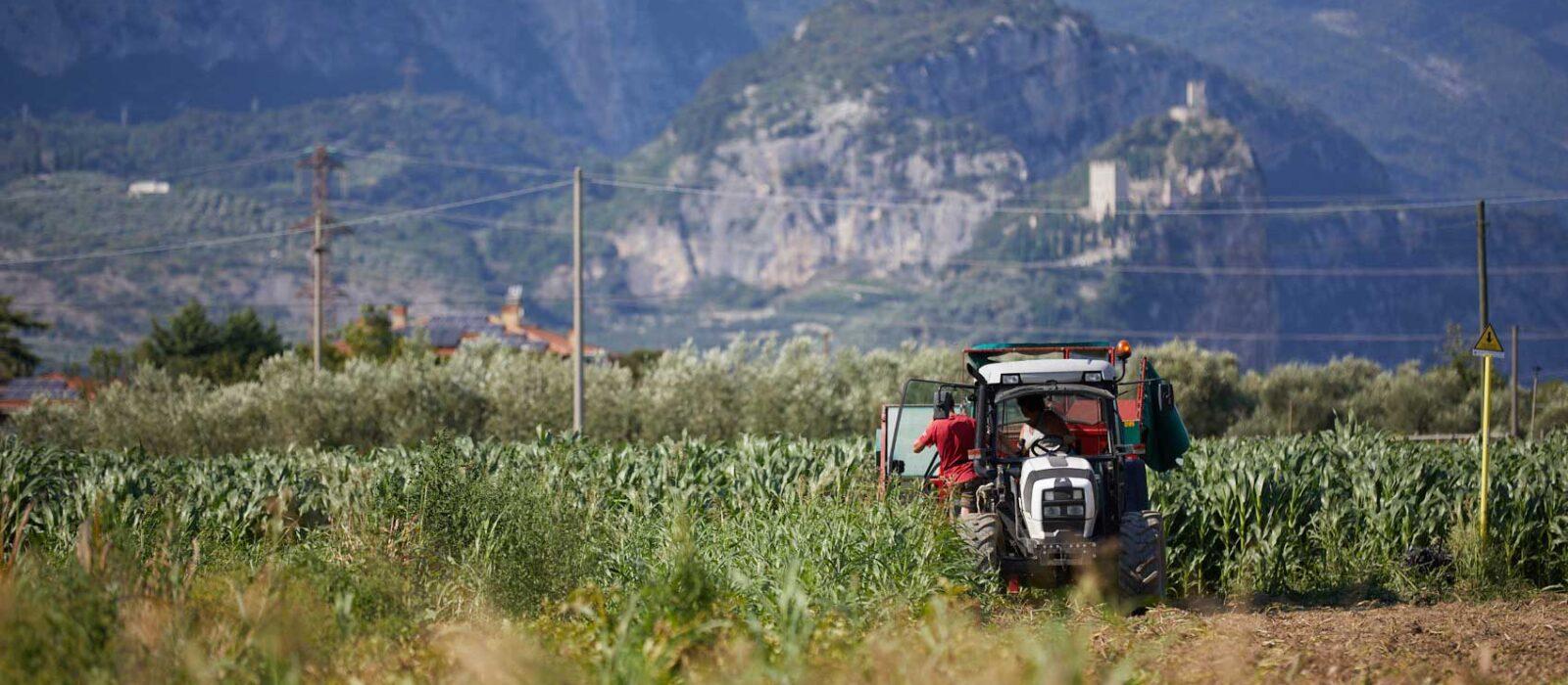 Scopri di più fattoria e azienda agricola - Agriturismo De Bas - Riva del Garda